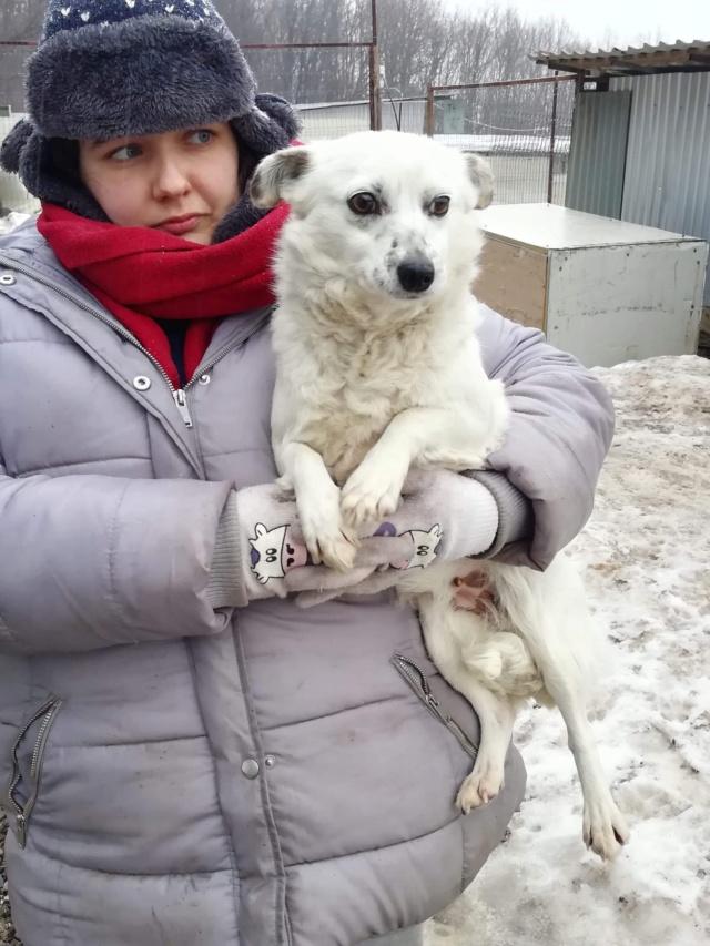 SHANI (ex SANI) - femelle croisée douce et gentille, de petite taille, née environ en février 2017 - PASCANI - adoptée par Christelle (88) 52875310