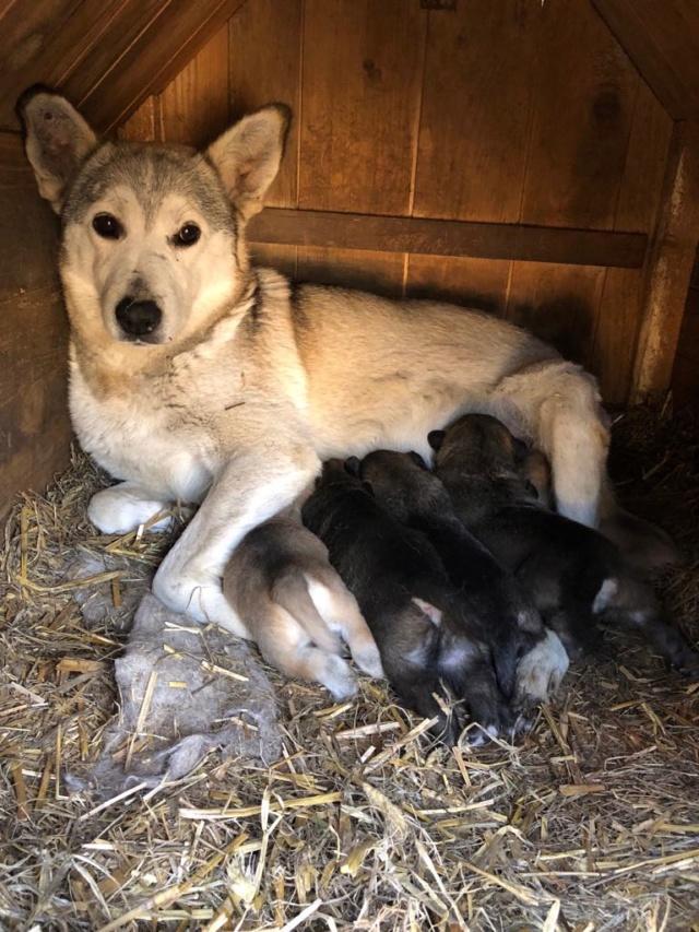 EUROPA - Magnifique femelle - mère courageuse sauvée de la mort - Taille moyenne - née environ en 2014 - Chez Carmina à Bucarest 55450410