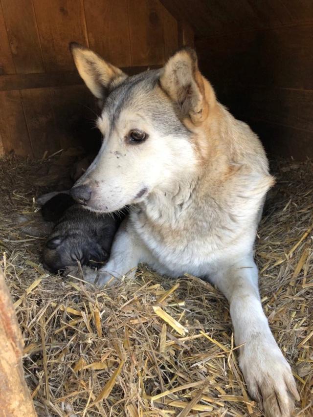 EUROPA - Magnifique femelle - mère courageuse sauvée de la mort - Taille moyenne - née environ en 2014 - Chez Carmina à Bucarest 55483110