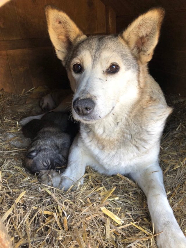 LOUVIA (ex EUROPA) - mère courageuse sauvée de la mort - Taille moyenne - née environ en janvier 2014 - Chez Carmina à Bucarest - Adoptée par Amelle (42) 55674510