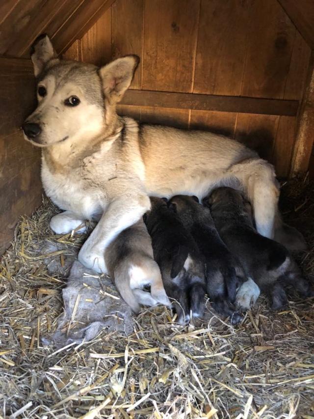 EUROPA - Magnifique femelle - mère courageuse sauvée de la mort - Taille moyenne - née environ en 2014 - Chez Carmina à Bucarest 55845410