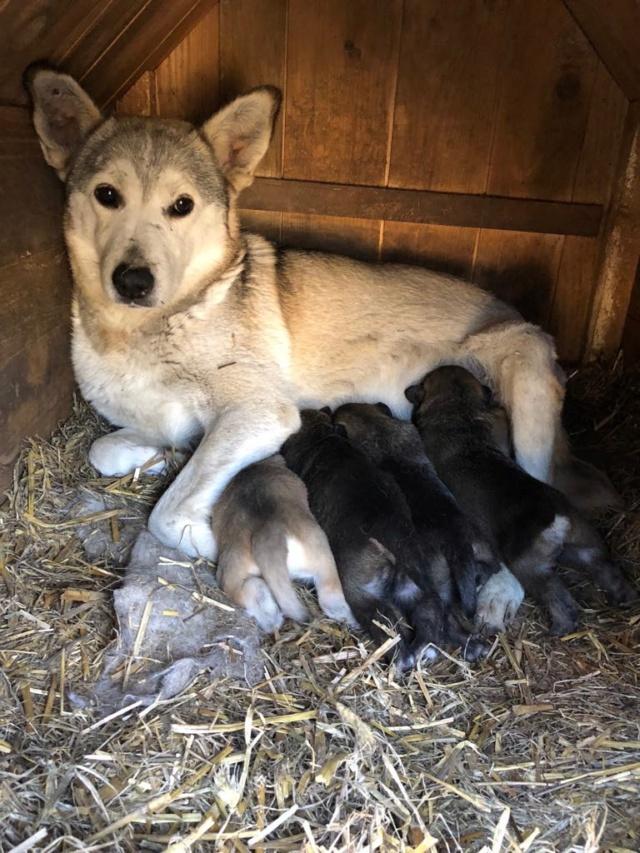 EUROPA - Magnifique femelle - mère courageuse sauvée de la mort - Taille moyenne - née environ en 2014 - Chez Carmina à Bucarest 55897010