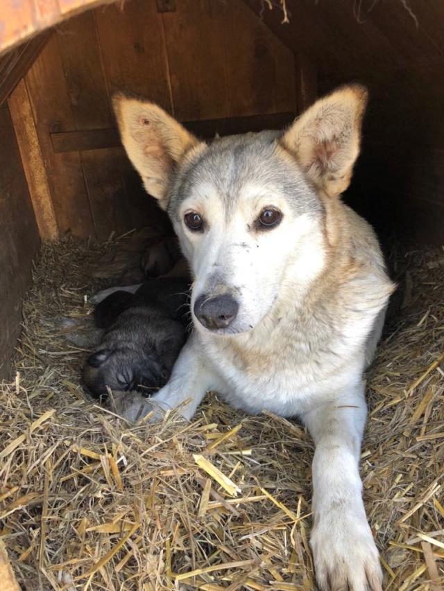 LOUVIA (ex EUROPA) - mère courageuse sauvée de la mort - Taille moyenne - née environ en janvier 2014 - Chez Carmina à Bucarest - Adoptée par Amelle (42) 56237510