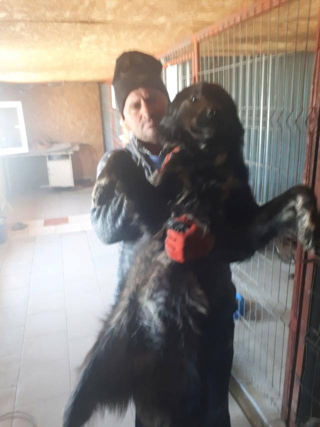 TYSON - mâle de taille moyenne à grande, né en 2017 - REMEMBER ME LAND - réservé adoption par Maria (93)  57119610