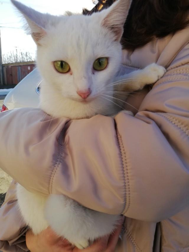 NERINA - Magnifique chatte blanche, née en 2018 - EN FA CHEZ FLORIN EN ROUMANIE - Adoptée par Stephanie (76) 57303310