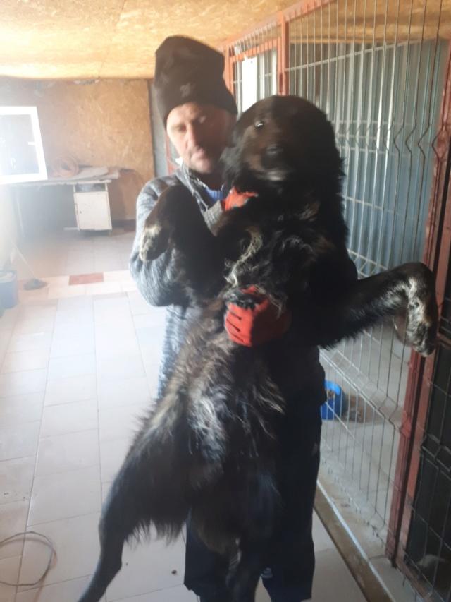 TYSON - mâle de taille moyenne à grande, né en 2017 - REMEMBER ME LAND - réservé adoption par Maria (93)  57313610