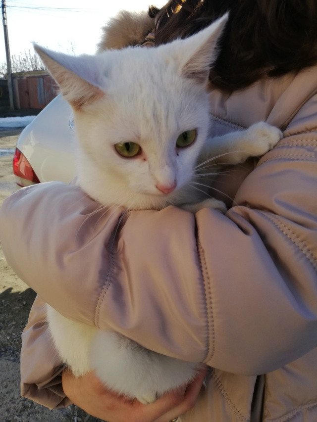 NERINA - Magnifique chatte blanche, née en 2018 - EN FA CHEZ FLORIN EN ROUMANIE - Adoptée par Stephanie (76) 57429710