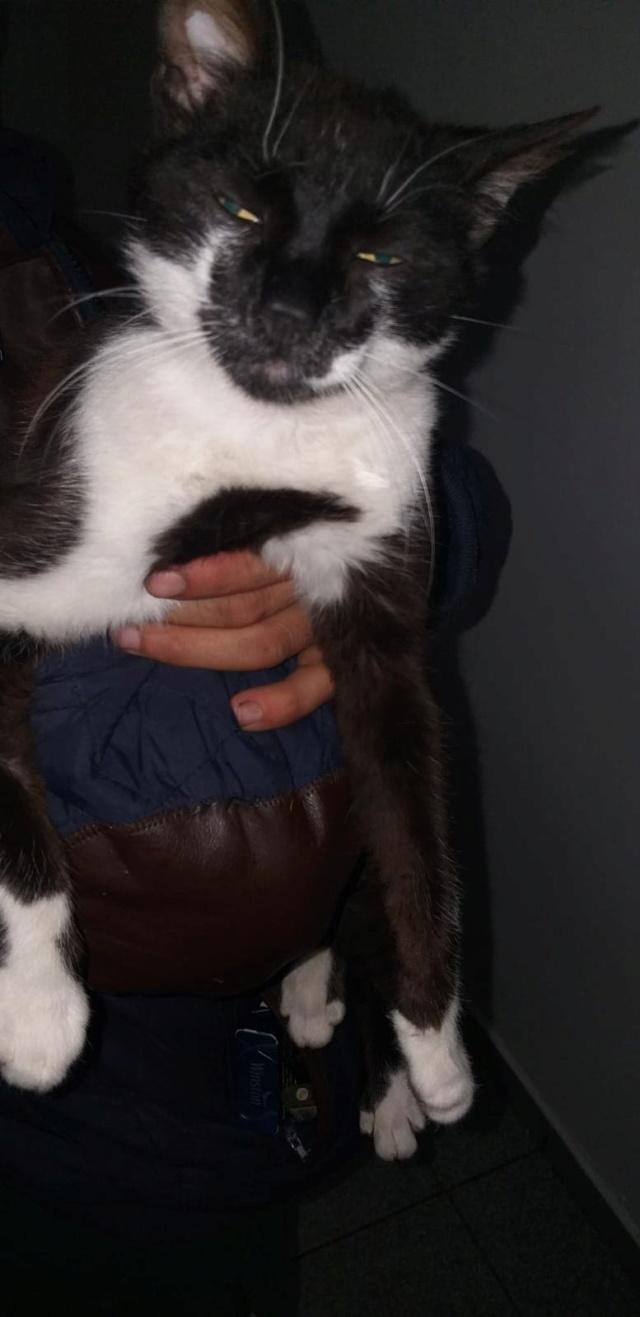 VASILICA - Chat mâle - Né en 2018 (Florin) - pris en charge par Sauvetage des Animaux 76 60827410