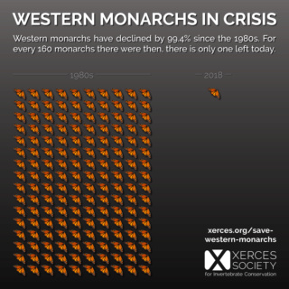 Monarch Butterfly Crisis Wester10