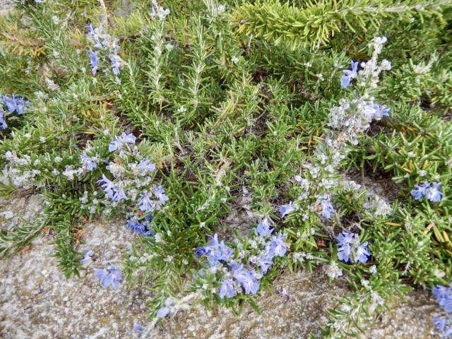 Jardins d'hiver Dscn8711
