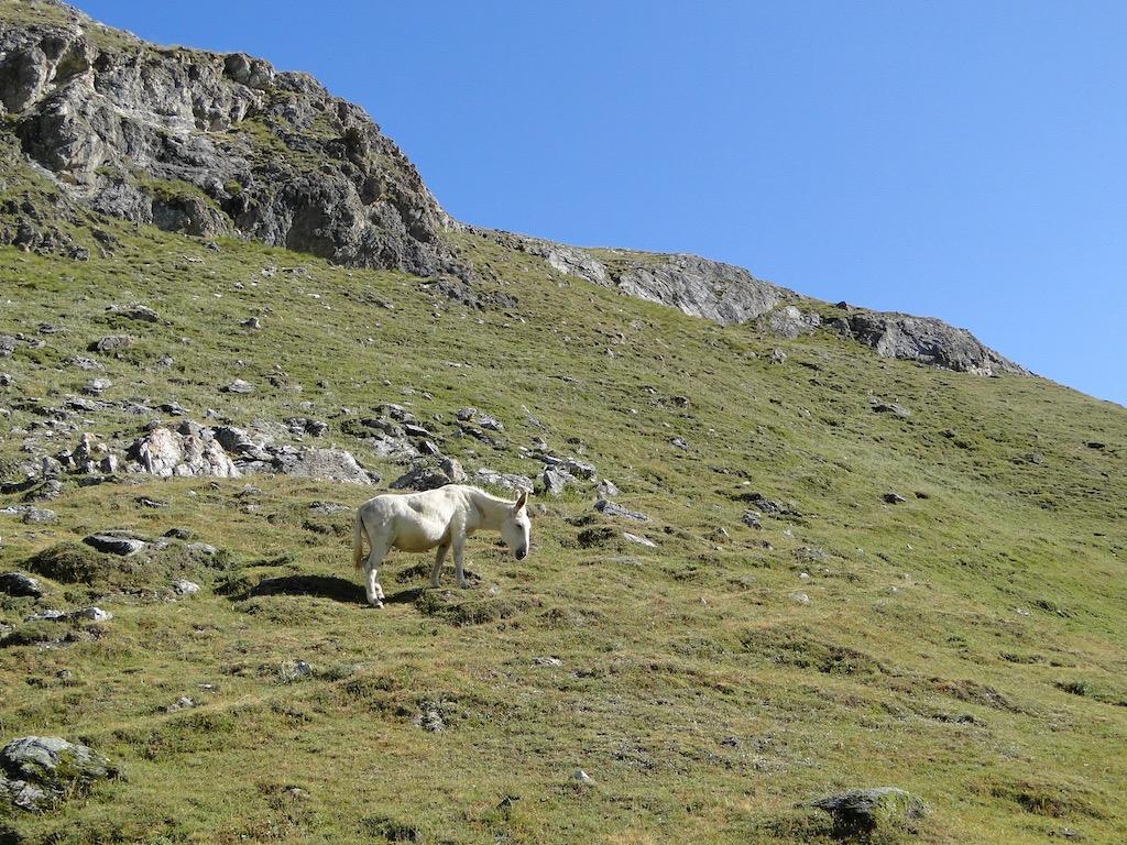 Termignon (Plume Fine) / Col de la Rocheure / Val d'Isère Dsc06739