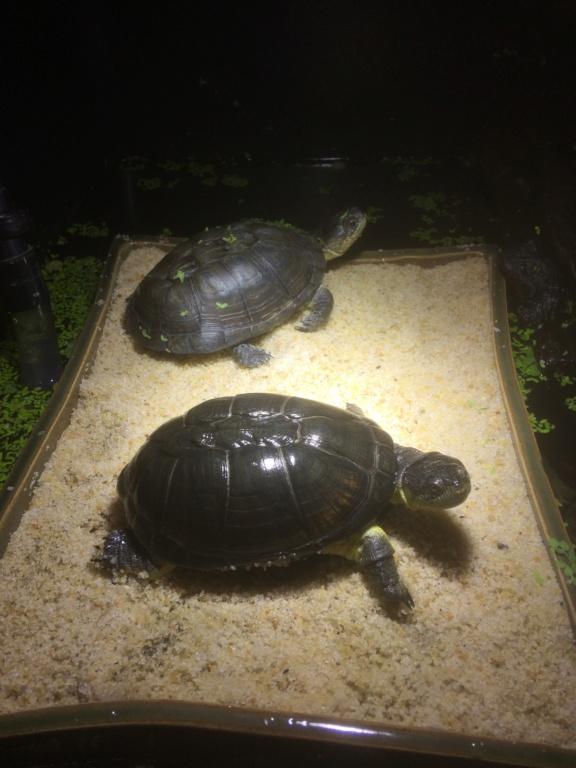 Turtleroom 573f1710