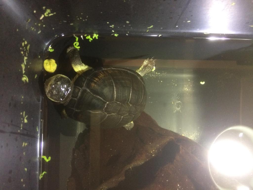 Turtleroom Ca0fb110