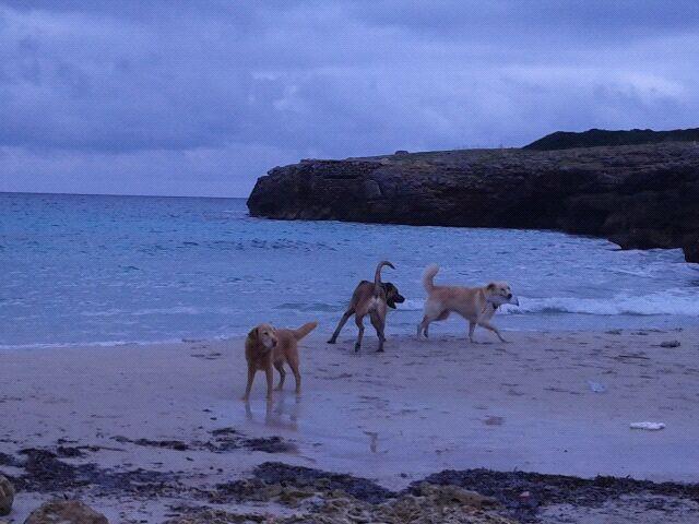 Balou - blieb auf Mallorca 34863614