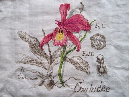 Etudes botaniques encadrées Orchid10
