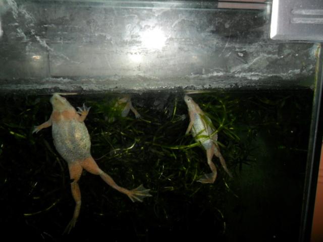 Mes grenouilles de petites tailles - Page 16 Photo214
