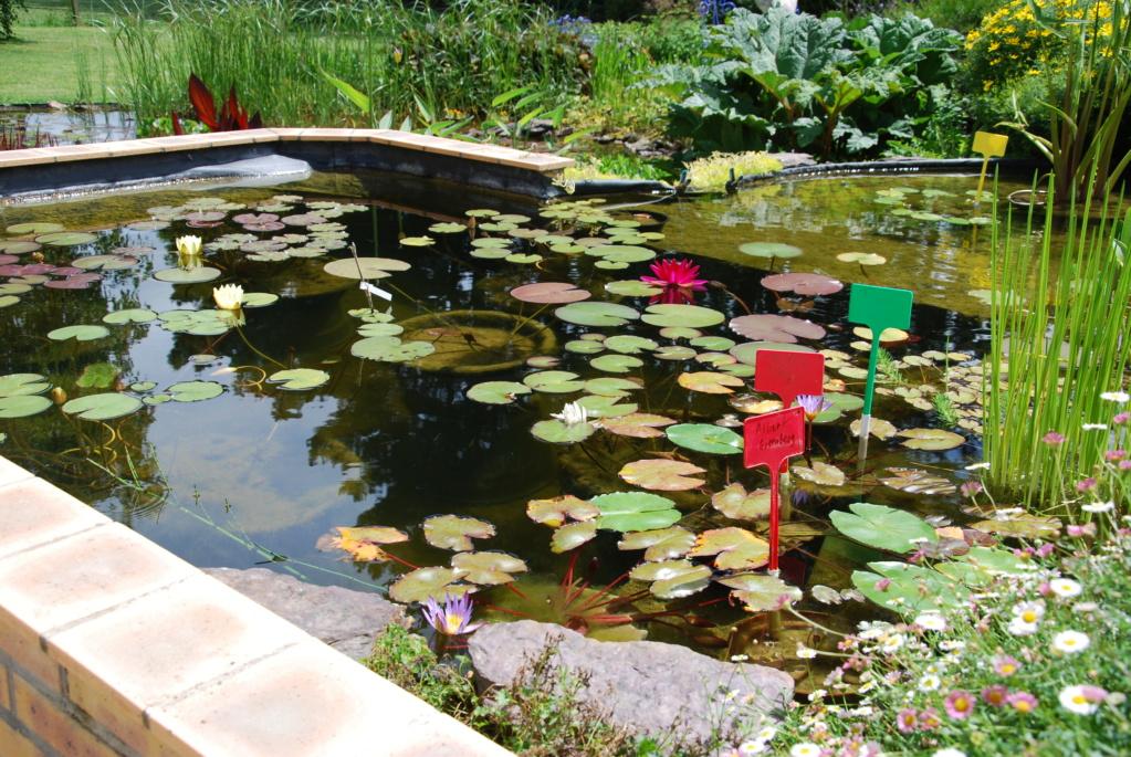 Jardin d'eau de Logan Dsc_2132