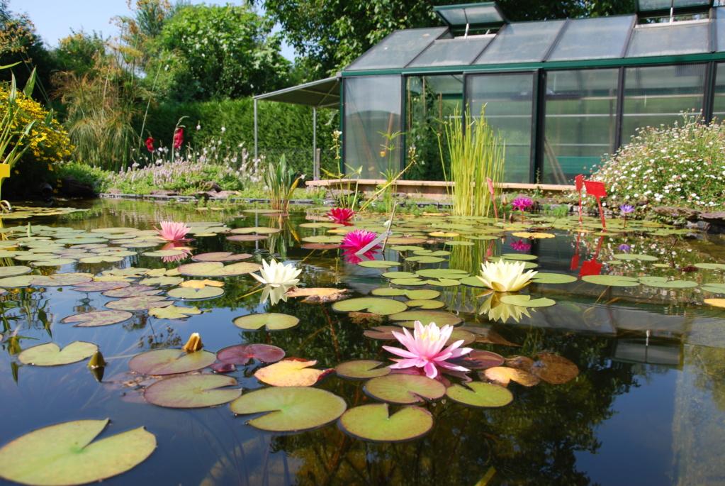 Jardin d'eau de Logan Dsc_2240