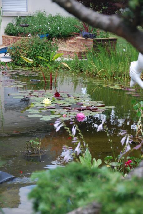 nagol - Jardin d'aquatiques - Page 3 Dsc_4124