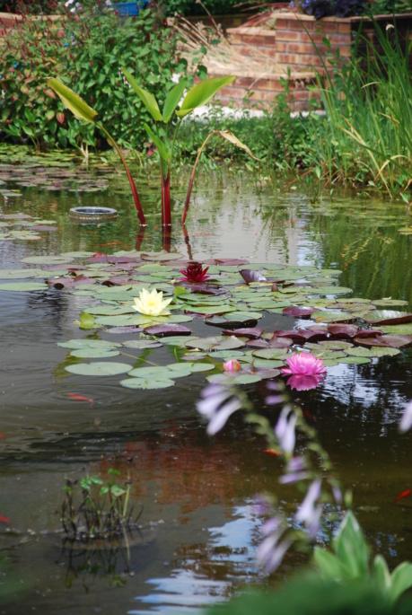 nagol - Jardin d'aquatiques - Page 3 Dsc_4127