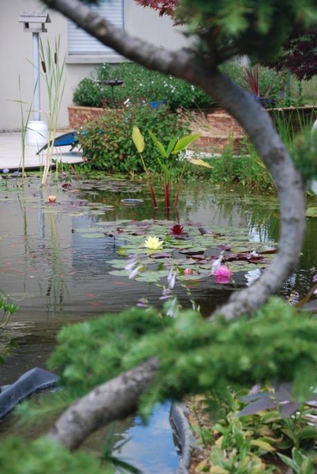 Jardin d'eau de Logan Dsc_4146