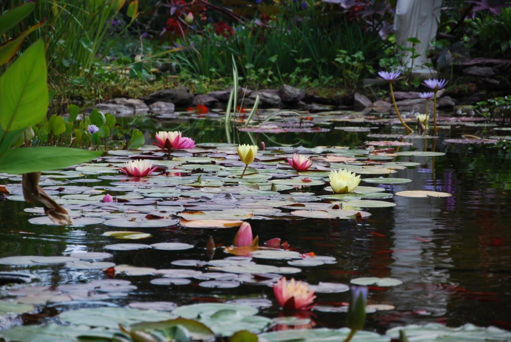 Jardin d'eau de Logan Dsc_4541