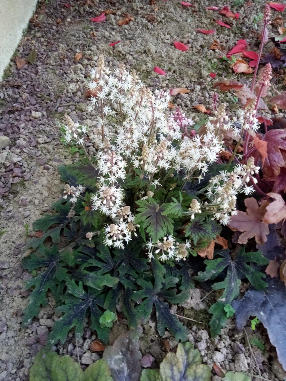 Floraisons du mois d'Avril Img_2557