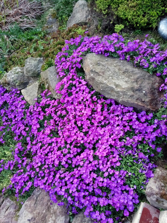 Floraisons du mois d'Avril Img_2558