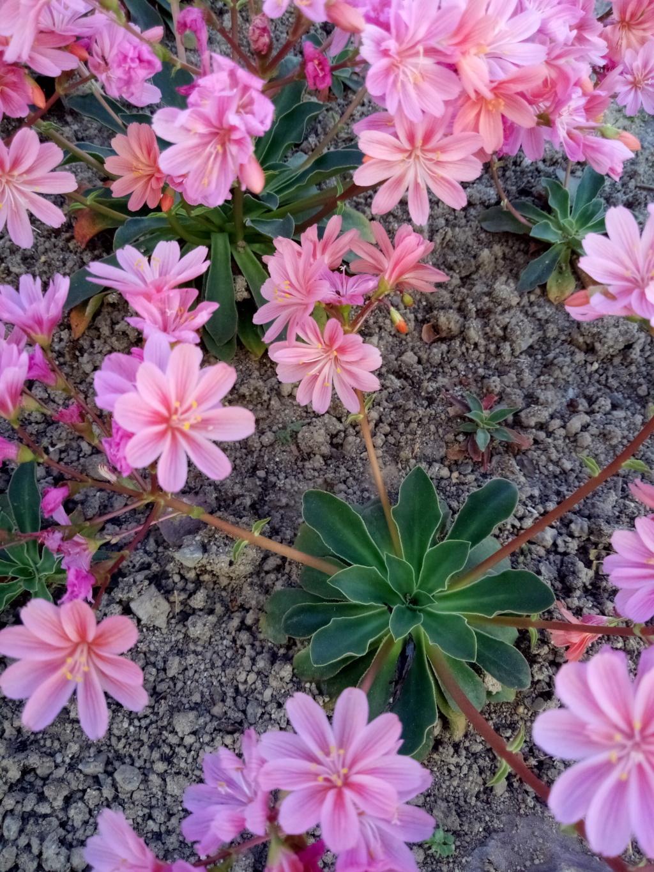 Floraisons du mois d'Avril - Page 4 Img_2583