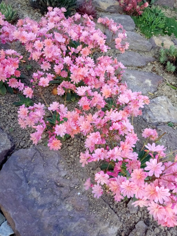 Floraisons du mois d'Avril - Page 4 Img_2584
