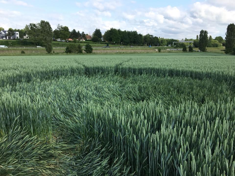 Crop circle à Baillet-en-France (95) 62210610