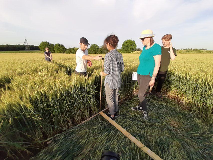 Crop circle à Saulx-Marchais (78) Sault111