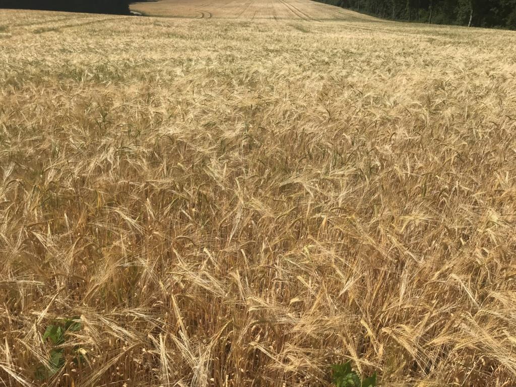 suivi blé tendre 2019 30a5a010