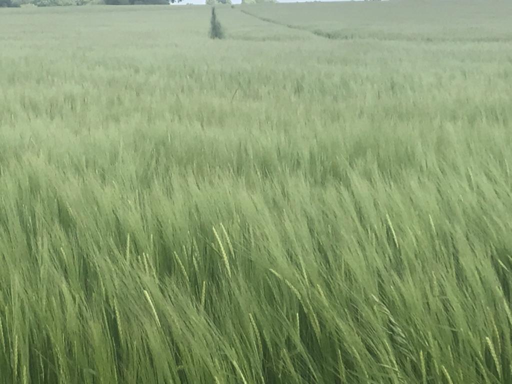 suivi blé tendre 2019 6db06e10