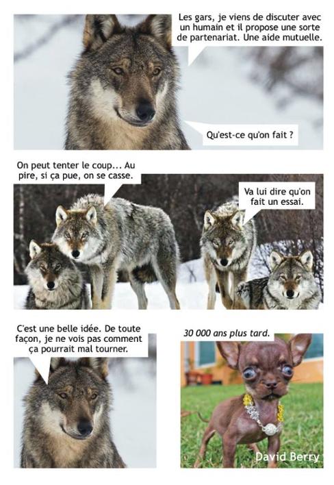 Dessins et Photos humoristiques - Page 32 Loup_c10