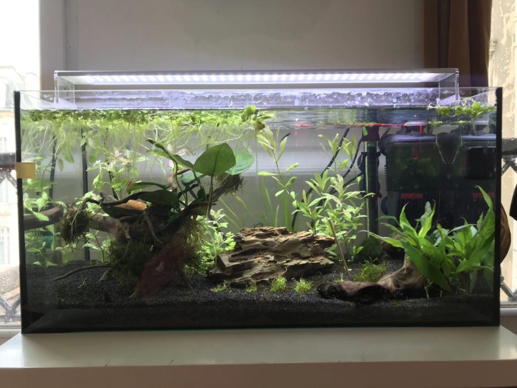 Population Nouvel Aquarium - Page 2 Img_0612