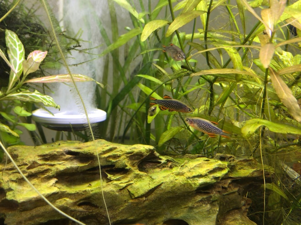 Population Nouvel Aquarium Img_0734