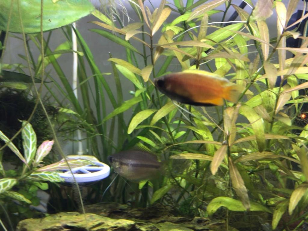 Population Nouvel Aquarium Img_0812