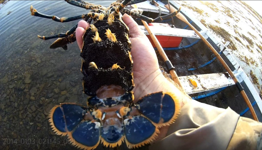 Les crevettes bleues - Page 2 She_lo10