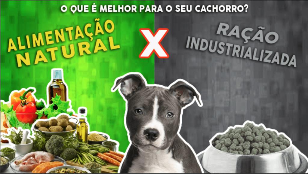 COMIDAS CASEIRAS PARA CÃES - OPÇÕES PRA A BOA SAÚDE DO SEU PET   Alimen10