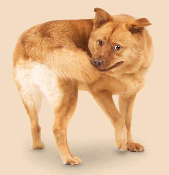Artigos Sobre Cães Cachor12
