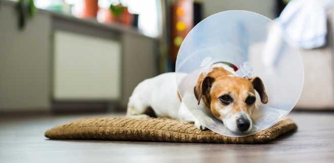 Artigos Sobre Cães Images10