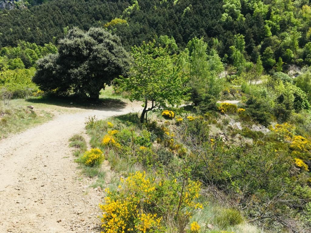 Pyrénées-Orientales - Mai 2019 Img_2416