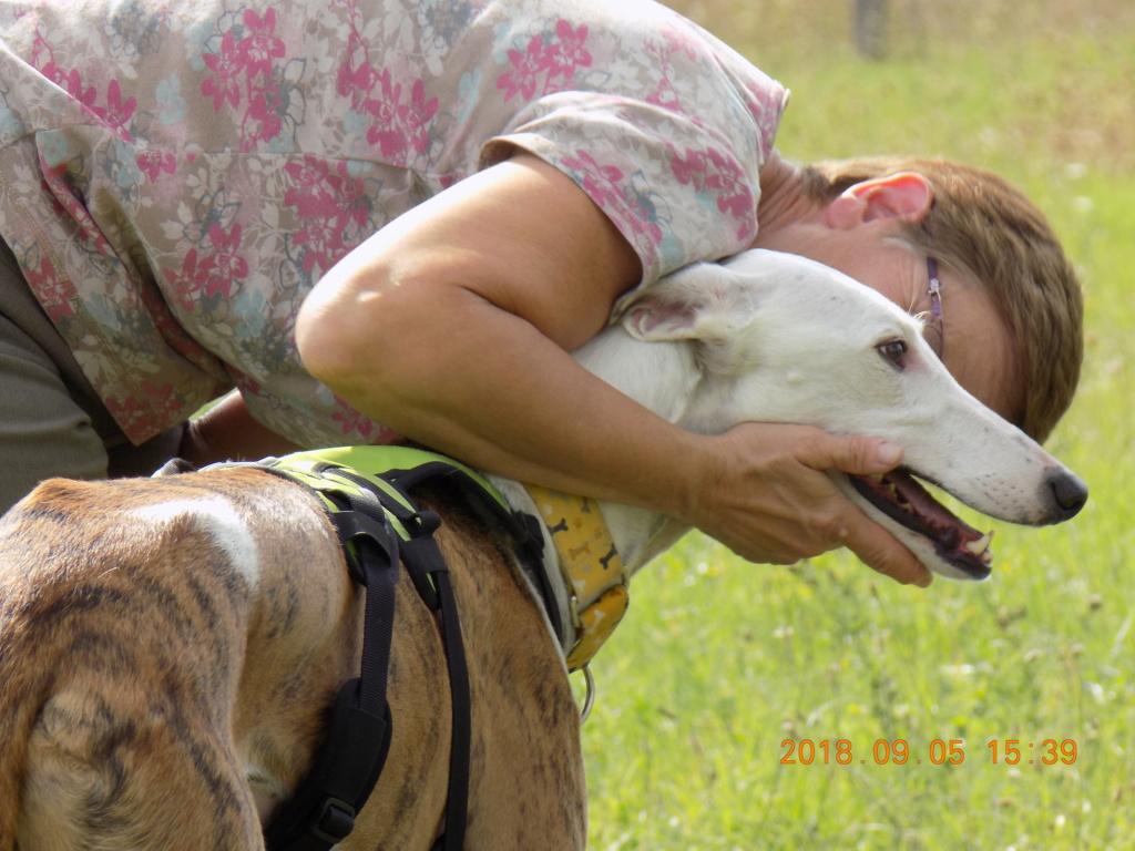 Buck galgo blanc et bringé de 4 ans Adopté  Dscn6512