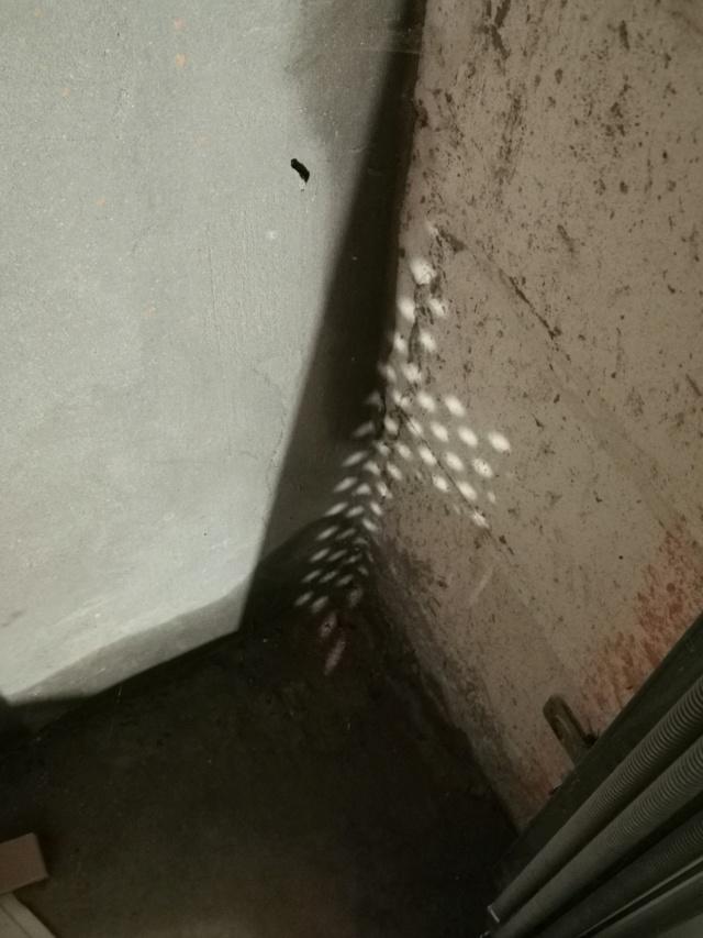Outillage équiper son garage Img_2032