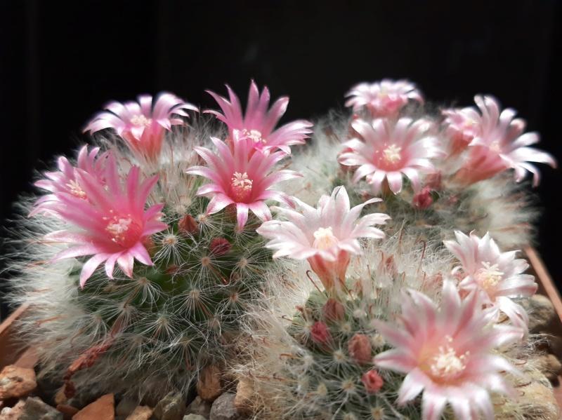 Cactus under carbonate. 19. 20190511