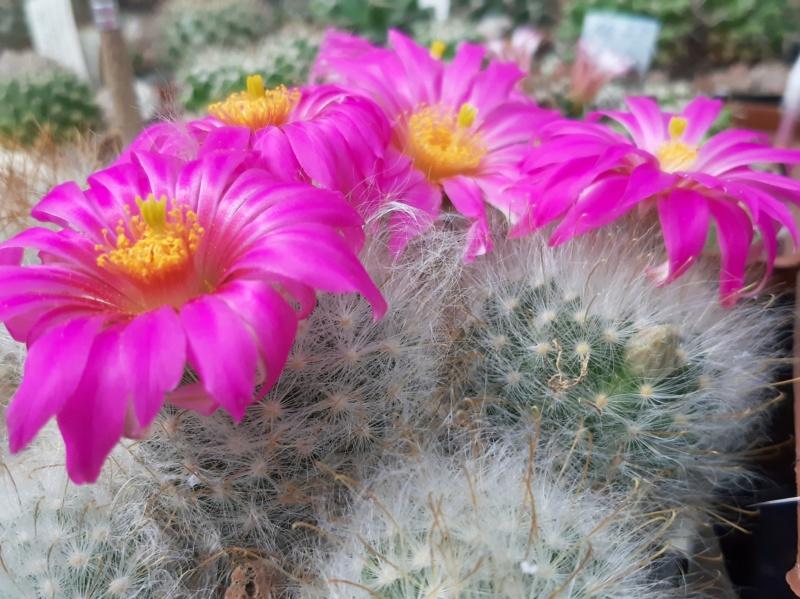 Cactus under carbonate. 19. 20190514