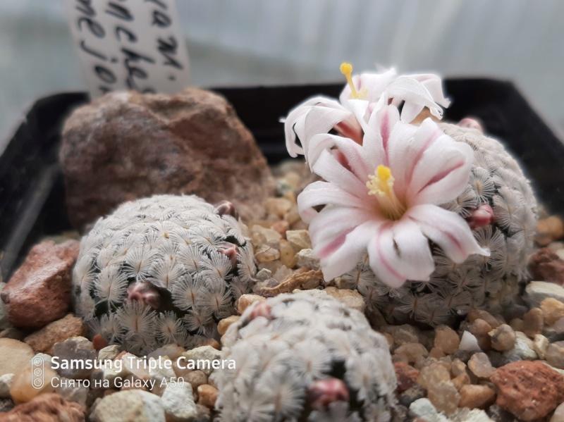 Cactus under carbonate. 20. 20200312
