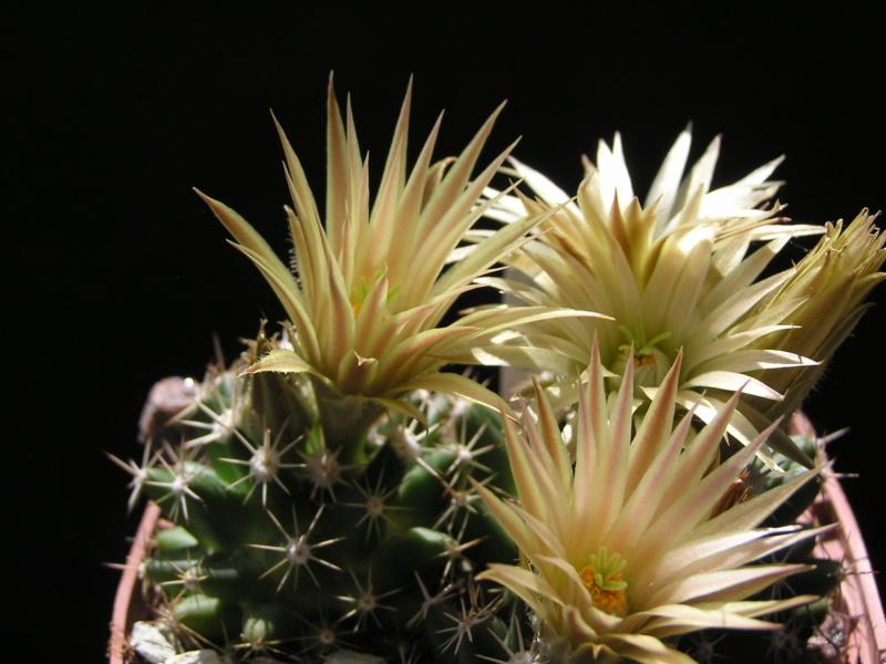Cactus under carbonate. 17. Started! Es_neo11
