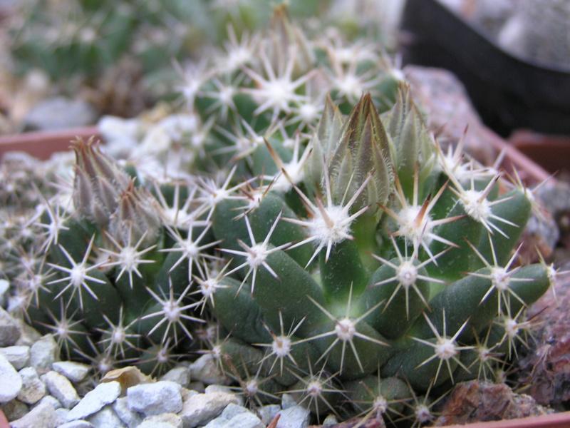 Cactus under carbonate. 17. Started! Es_neo12